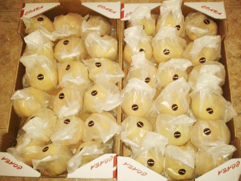 melocotón de calanda amarillo embolsado listo para salir al mercado